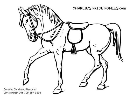 Charlie's Pride Ponies in Little Britain, ON